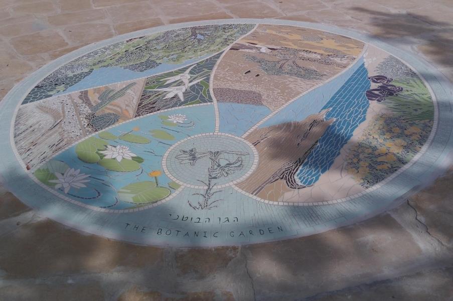 מבט מהכניסה: במרכז רצפת הפסיפס, סמל הגן הבוטני- שושן צחור