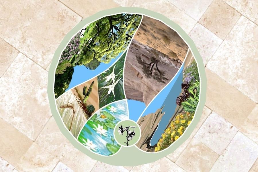 תכנית הפסיפס: חלוקת הפסיפס לחמישה חלקים אמורפיים. בכל חלק בית גידול או אזור בגן הבוטני